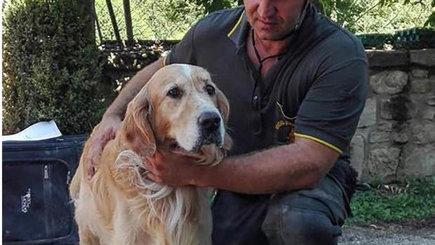 Dog found Italy earthquake