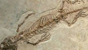 New Mexico ancient reptile species