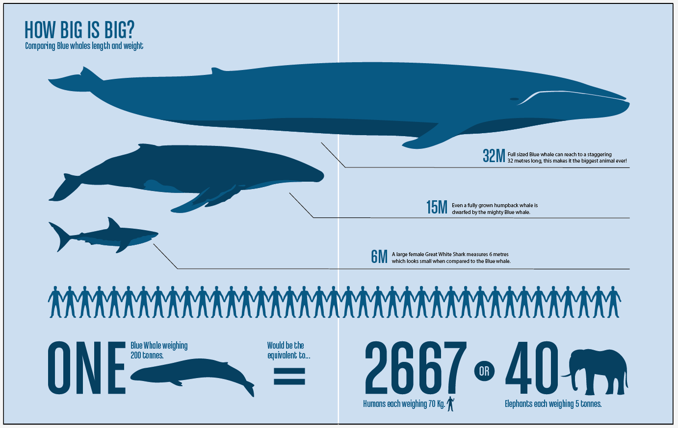 blue whale endangered animal cause and effect At seaworld parks, animal trainers routinely take a variety of measurements — including length, girth, and fin height — of killer whales for a whale born at seaworld, experts are able to relate these measurements to the known age of the whale.