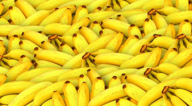Cavendish banana, bright yellow, is on sale in supermarkets, but is nevertheless in danger. The great global monoculture of genetically identical plants made the Cavendish particularly vulnerable to epidemics. Read more at http://www.atlantico.fr/decryptage/bananes-vont-elles-disparaitre-2870696.html#vLLR2uZ2sbj42r0Y.99