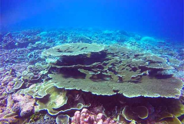 christmas-island-diving-coral-kiritimati-atoll