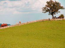Los Lunas project to gain groun