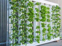 vertical farming market
