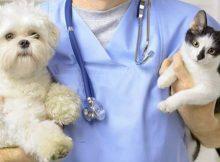 animal veterinary market