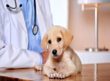 Animal Diagnostics Market