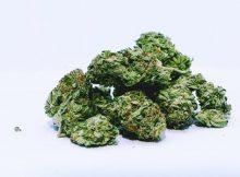 medical cannabis firm tilray