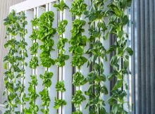 Asia Pacific Vertical Farming Market